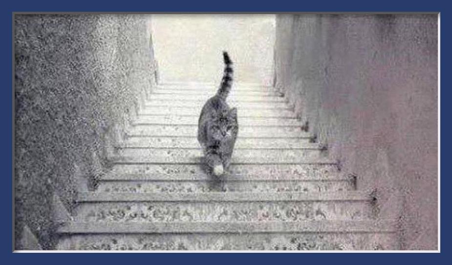 MC Escher's Cat Takes a Walk
