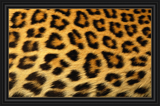 How to Frame Animal Prints and Skins